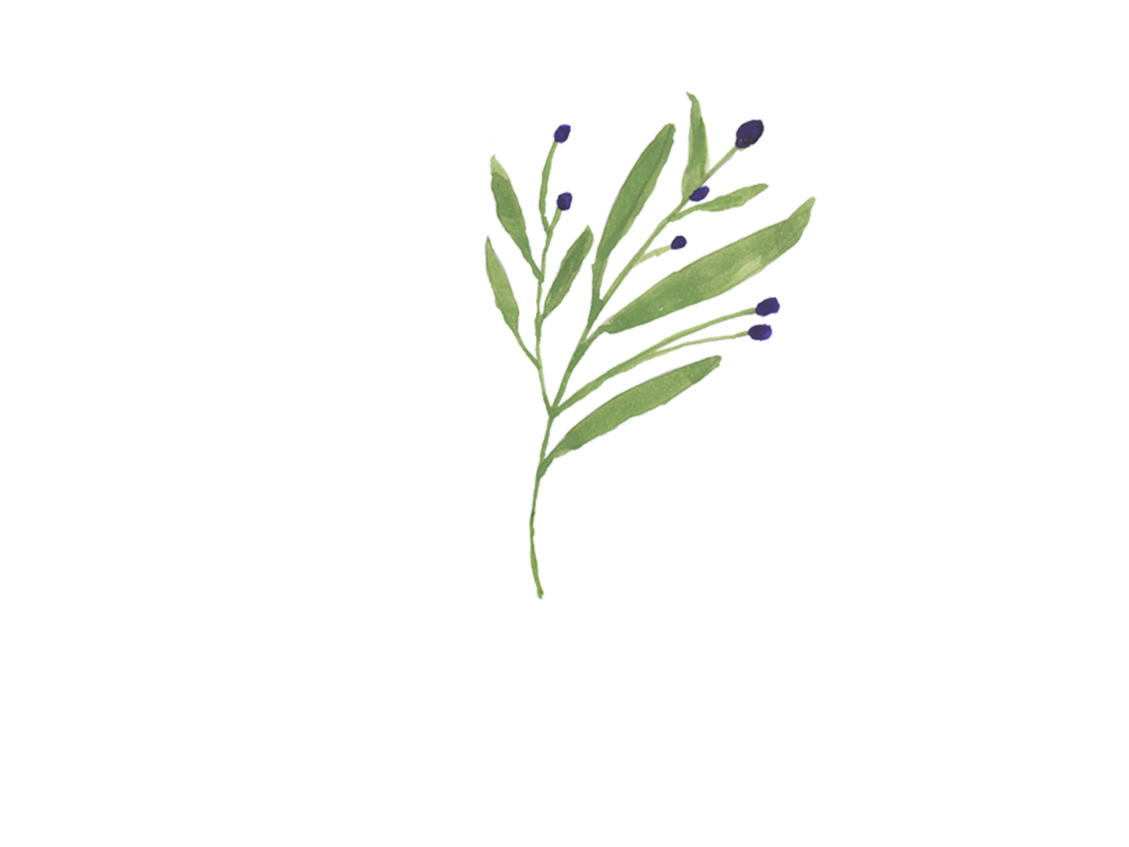 Debbie Nitsche Windermere Bainbridge Island